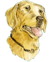 Illustration of a yellow lab on an abstract background