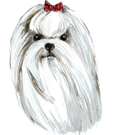 Illustration of a white maltese on an abstract background