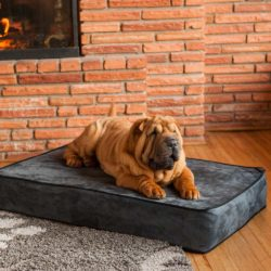 Outlast® Dog Bed Sleep System - 5 Inch Thick