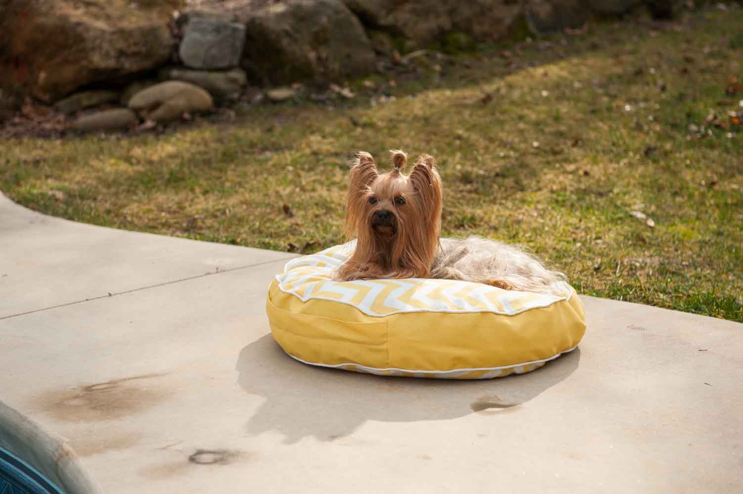 Replacement Cover Snoozer Pool Amp Patio Round Dog Bed