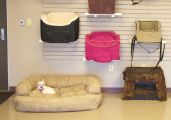Snoozer Pet Products - Family Dogs