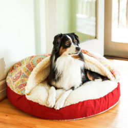 orthopedic-cozy-cave-dog-bed-snoozer-pet-products-wag-collection