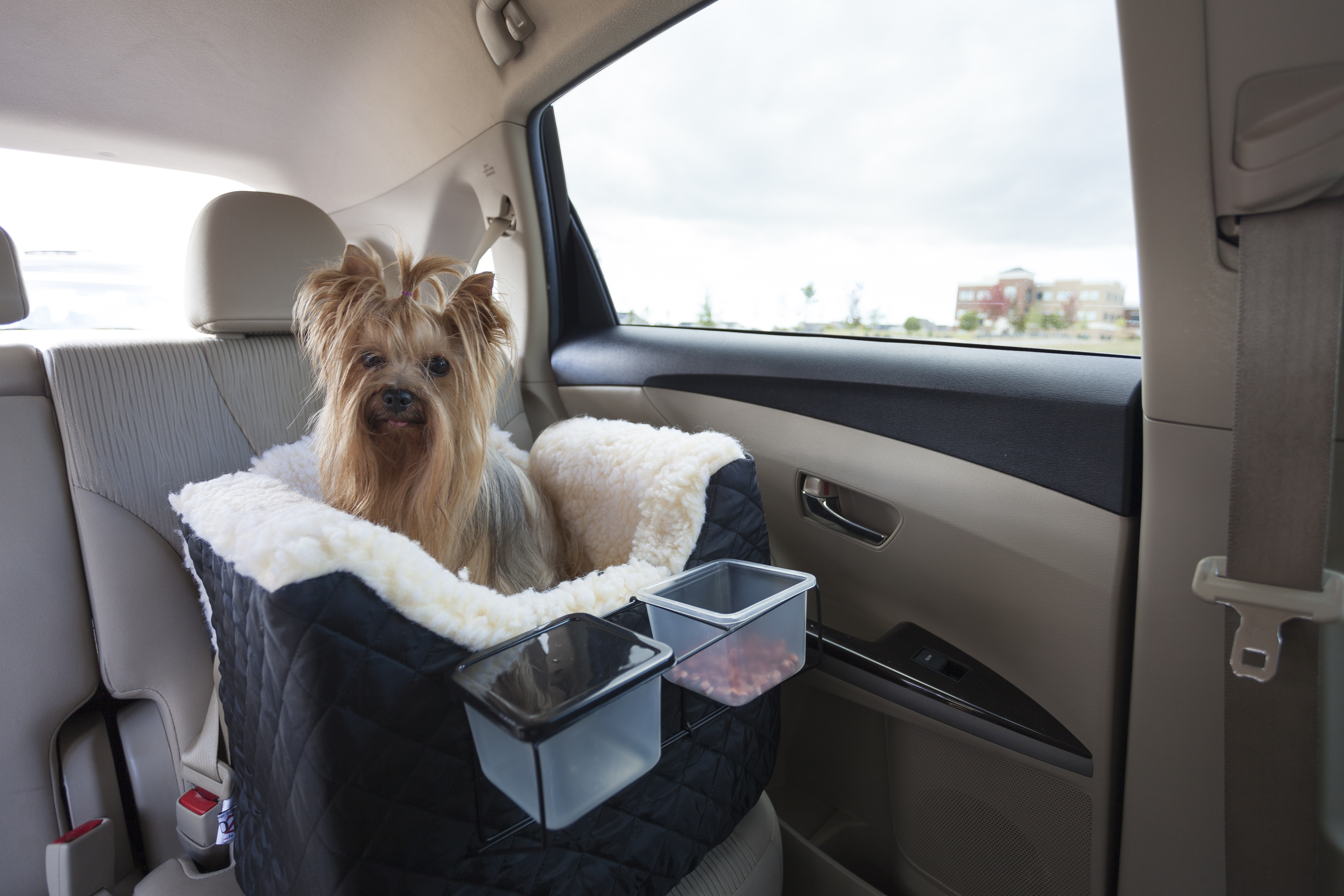 Luxury Lookout I Dog Car Seat Untamed Collection