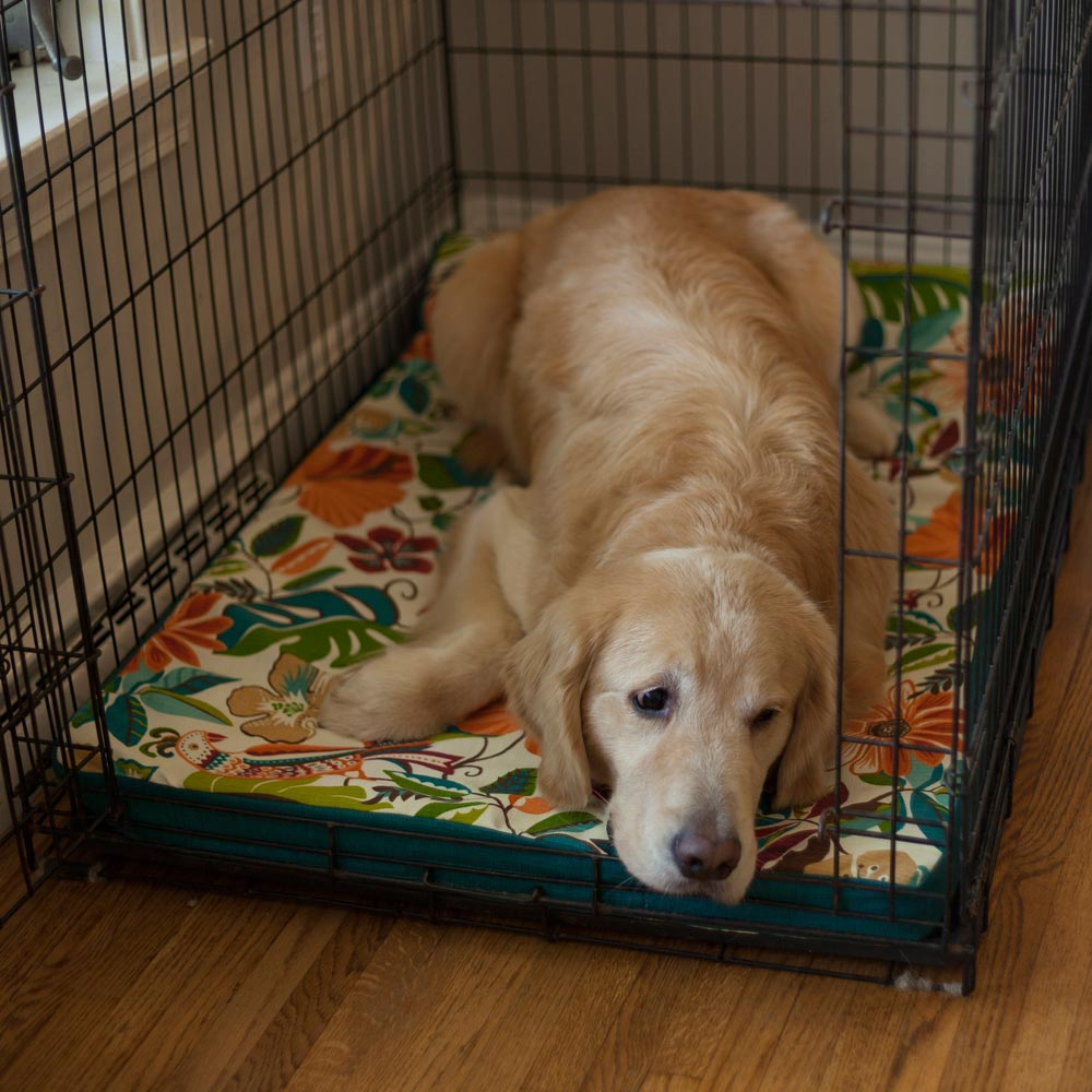 Forgiveness Dog Crate Pad - WAG Collection