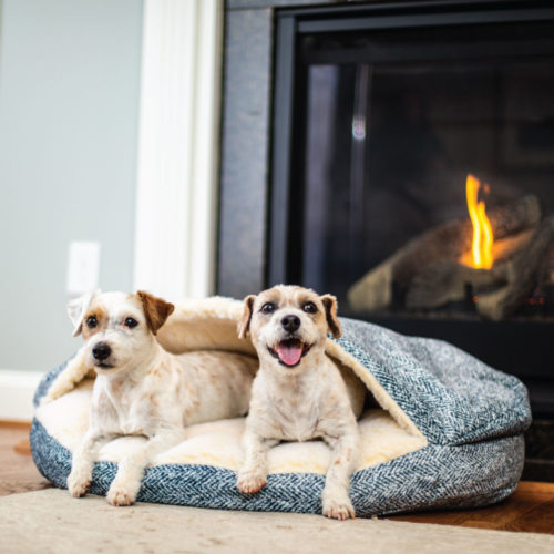 luxury-cozy-cave-dog-bed-snoozer-pet-products-palmer-indigo