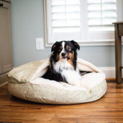 orthopedic-luxury-cozy-cave-dog-bed-snoozer-pet-products-palmer-citron