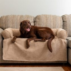 Couch Companion Bolstered Sofa Throw | Snoozer