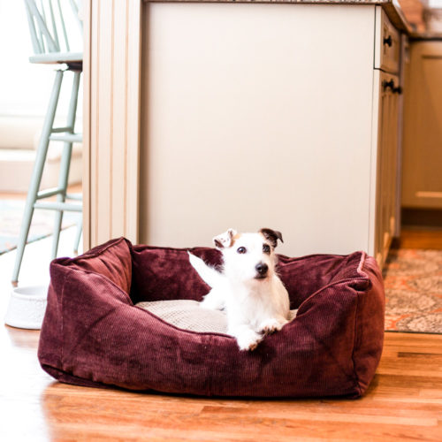 home-and-go-luxury 2-in-1-travel-dog-bed-snoozer-pet-products