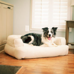 Snoozer Pet Products Luxury Sleeper Sofa