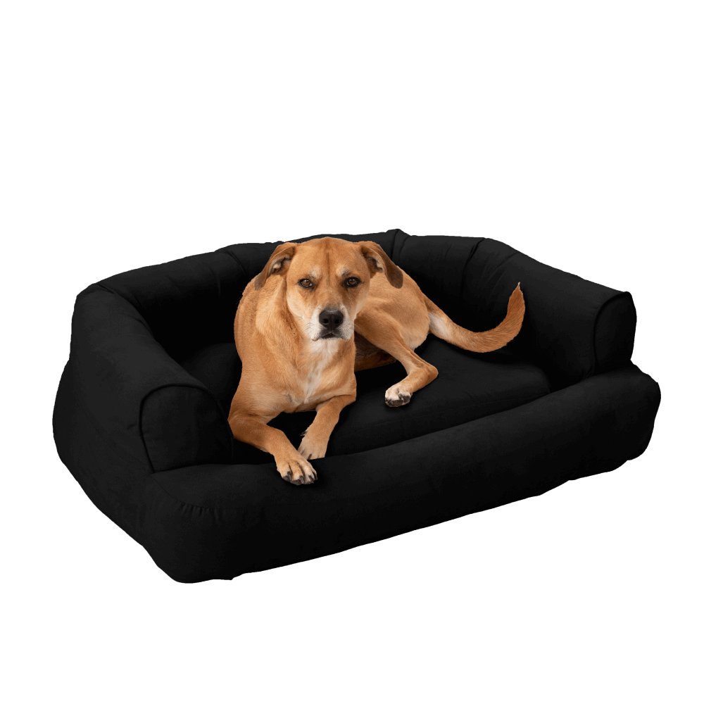 Black   Snoozer Pet Products