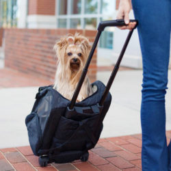 Roll Around Travel Dog Carrier Backpack 4-in-1